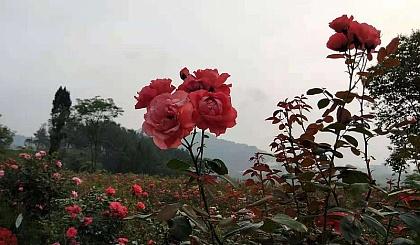 互动吧-10月31日(瑜徒)达州河市成都山快乐健康行002期