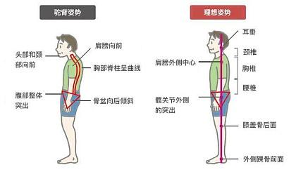 互动吧-圆肩驼背没气质每天3分钟轻松治