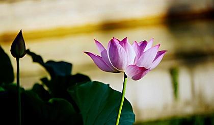 互动吧-6月21日国际瑜伽日,东湖山古戏台户外瑜伽