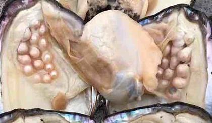互动吧-9月22日陶冶时光珍珠开蚌DIY活动