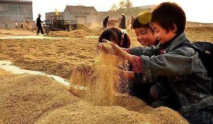 """互动吧-【747期】收水稻 感恩金秋丰收馈赠""""金秋稻香主题亲子活动"""