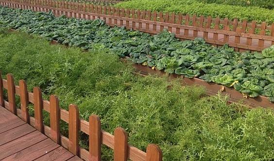 498元一家人做城市农场主,共享农场的主人。