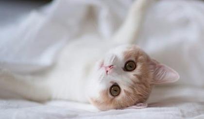 互动吧-第二届浙江国际宠物产业展【门票】丨展会时间11.29-12.1