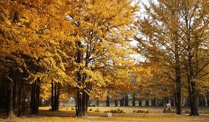 互动吧-9月7/14/21日黔方秋景,行走在最美的路上,妥乐银杏村3日自驾游