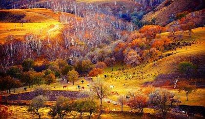 互动吧-国庆 ● 塞北秋色︱乌兰布统越野深度赏秋摄影,秋色如画 ● 霜林浸染