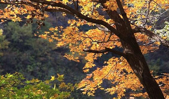 10.13【周末休闲】【AA约伴】怀柔喇叭沟~南猴顶~北猴顶赏秋色一日休闲游