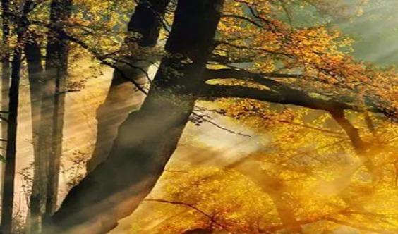 【高铁】南雄银杏摄影天堂帽子峰、红沙漠、泡天然温泉三日之旅