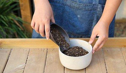 互动吧-家庭园艺课程(免费学养花)