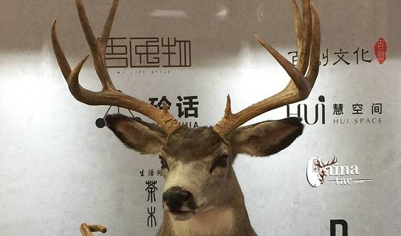 2020北京国际工艺美术精品博览会官网