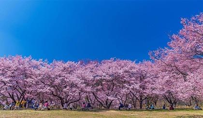 互动吧-阳春三月赏花季,又到樱花烂漫时