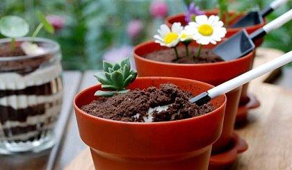 互动吧-优贝思烘焙课——盆栽木糠杯