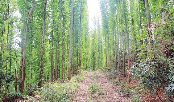 【收官之站】12月15日广100第五站-博罗欧野奇境绿野丛林穿越大型徒步活动