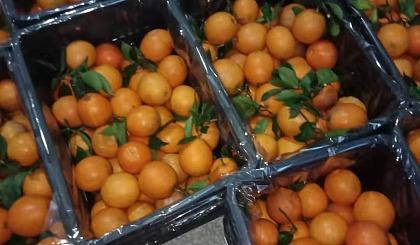 互动吧-公益助农:湖南汝城橙子