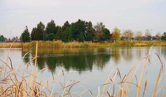12月14日(周六)迪士尼星愿湖观鸟活动,欢迎新人参加!