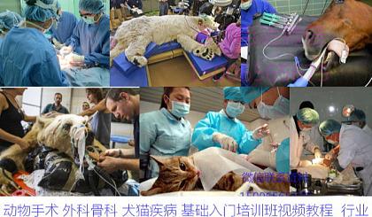 互动吧-动物手术 外科骨科 犬猫疾病 基础入门培训班视频教程