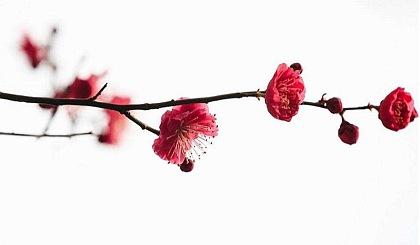 互动吧-融沃2月22世纪公园赏梅游约拍