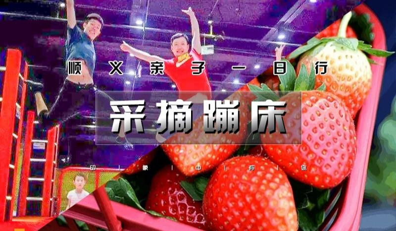 【周末1日●采摘蹦床】草莓采摘&蹦床乐园 亲子1日行