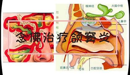 互动吧-念佛治疗颌窦炎的方法与原理(绝密真理,一句话疗法)