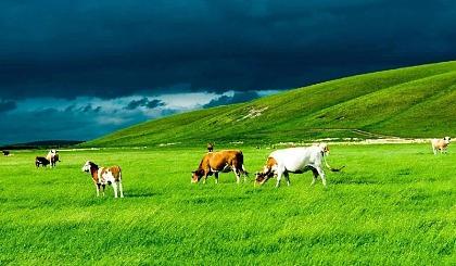 互动吧-【周末2日●坝上草原】露营/蒙古包、越野、骑马、烤全羊、篝火晚会,玩的随心所欲